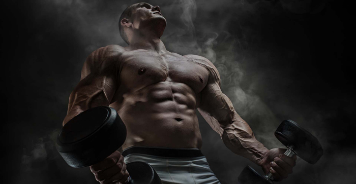 Muscle Factory exercise